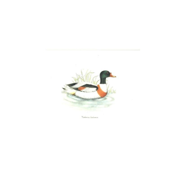 Image 3D RO23 - 20x25 - canard col vert - Photo n°1