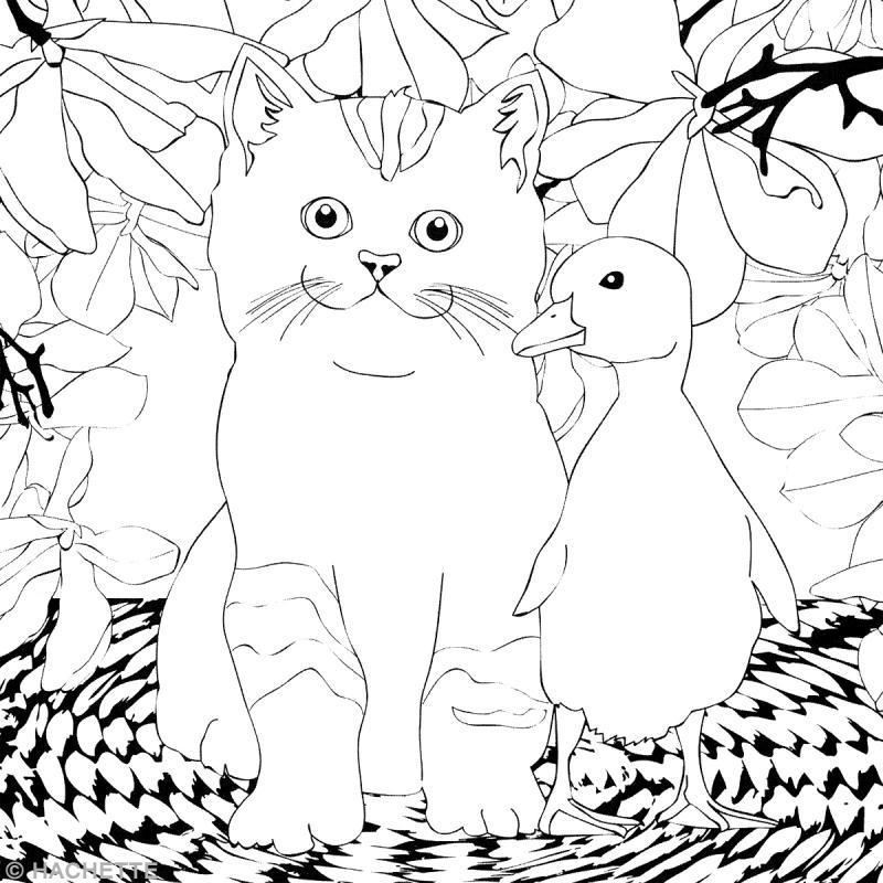 livre coloriage adulte anti stress chat thérapie 13 8 x 19 5