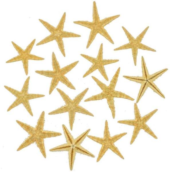 Etoiles de mer décoration astropecten vappa - Taille 6 à 8 cm - Lot de 10 - Photo n°1