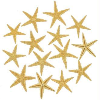 Etoiles de mer décoration astropecten vappa - Taille 6 à 8 cm - Lot de 10