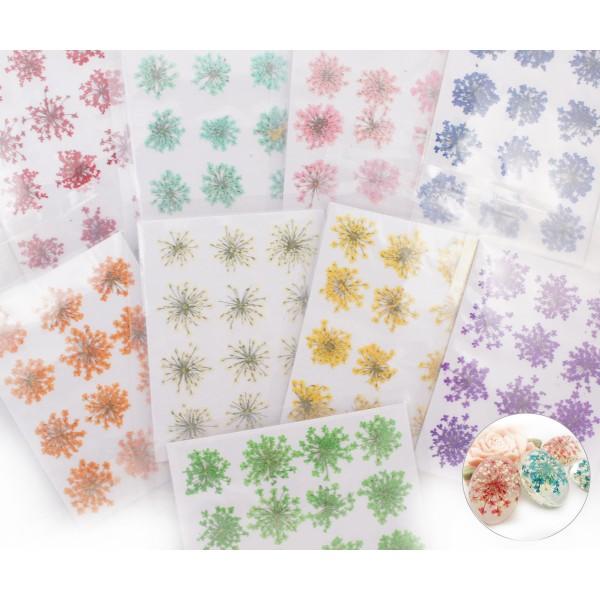 12pcs Teint Jaune Pressé Séchées Ammi Majus Fleur de Plantes Sèches Époxy Résine UV Pendentif Collie - Photo n°2