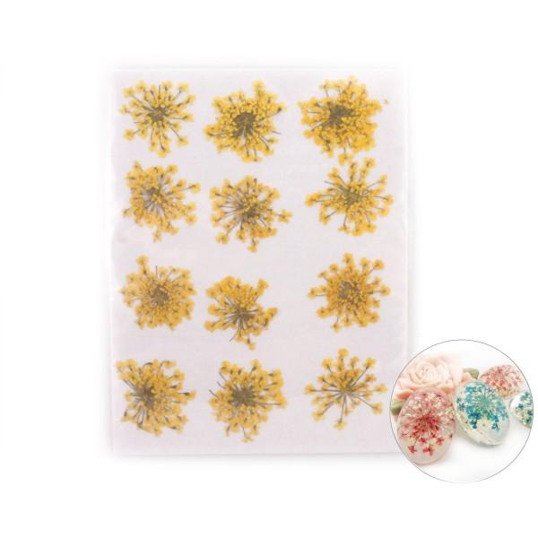 12pcs Teint Jaune Pressé Séchées Ammi Majus Fleur de Plantes Sèches Époxy Résine UV Pendentif Collie - Photo n°1