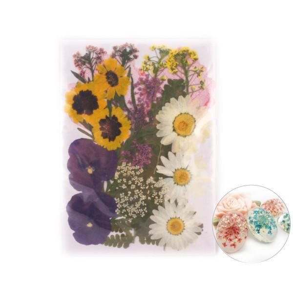 26pcs Pansy Mélange Naturel Pressé de Fleurs Séchées de Feuilles de Plantes Sèches Époxy Résine UV P - Photo n°1