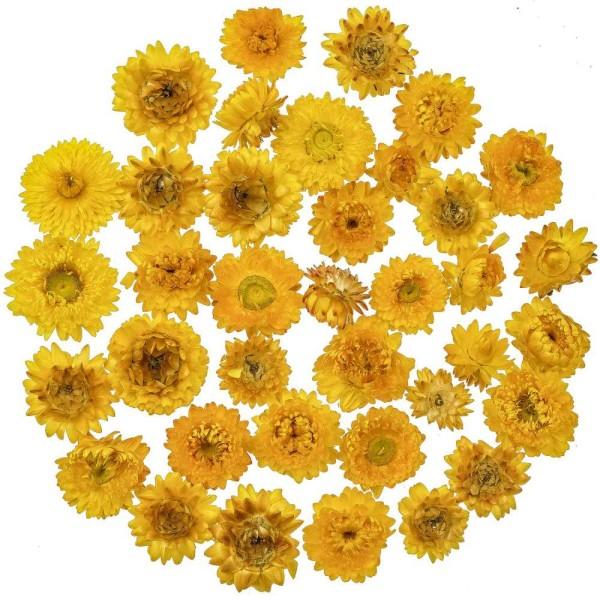 Têtes d'hélichrysum jaune séchées (immortelles) - 50 grammes - Photo n°1