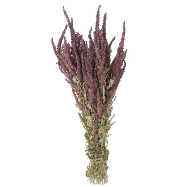 Bouquet fleurs séchées amaranthus rouge - 70 cm - Photo n°1