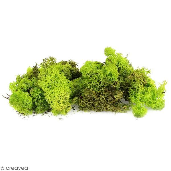 Lichen scandinave stabilisé - Vert clair - 50 g - Photo n°1