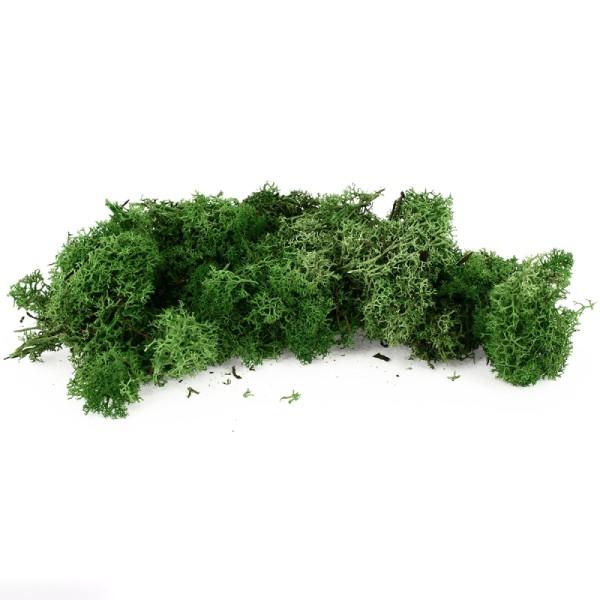 Lichen scandinave stabilisé - Vert foncé - 50 g - Photo n°1
