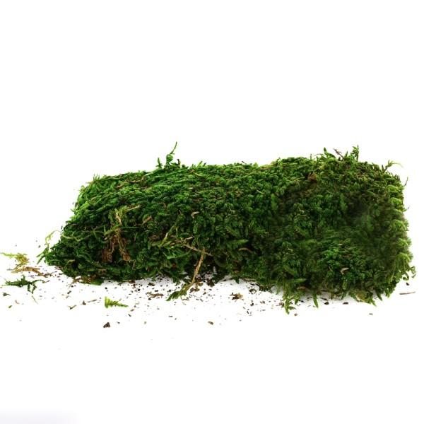 Mousse verte stabilisée - 50 g - Photo n°1