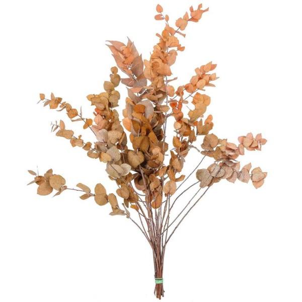 Feuillage d'eucalyptus stuartiana orange stabilisé - 70 cm. - Photo n°1
