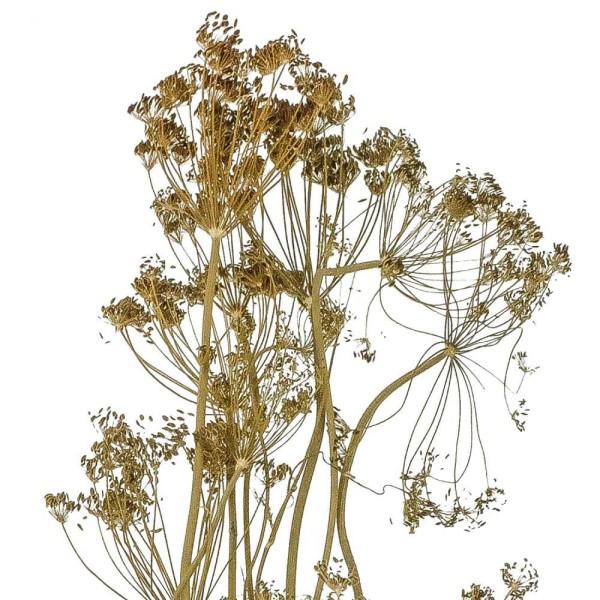 Bouquet séché aneth déco - 70 cm - Photo n°3