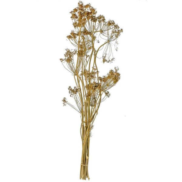 Bouquet séché aneth déco - 70 cm - Photo n°1