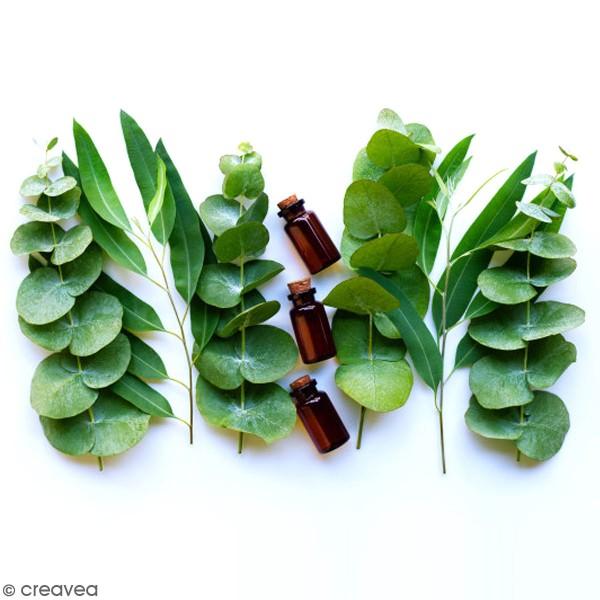 Hydrolat bio - Eucalyptus - 100 ml - Photo n°2