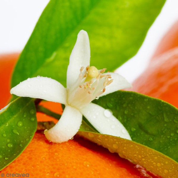 Hydrolat bio - Fleurs d'oranger - 100 ml - Photo n°2