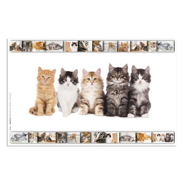 Sous-main chats (L)550 x (H)350 mm - Photo n°1