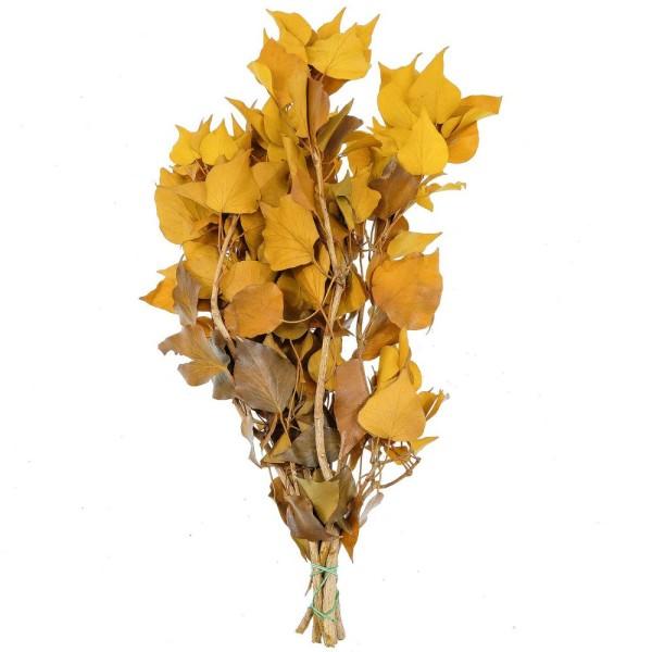 Feuillage de lierre jaune stabilisé - 60 à 70 cm - Photo n°1