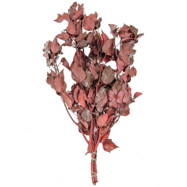 Feuillage de lierre rouge stabilisé - 60 à 70 cm - Photo n°1