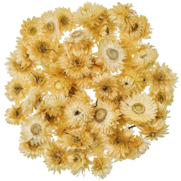 Têtes d'hélichrysum blanc (immortelles) - 50 grammes - Photo n°1