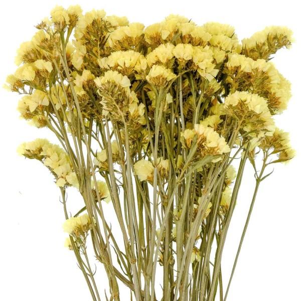 Bouquet de fleurs séchées statice sinuata jaune - 45 cm - Photo n°3