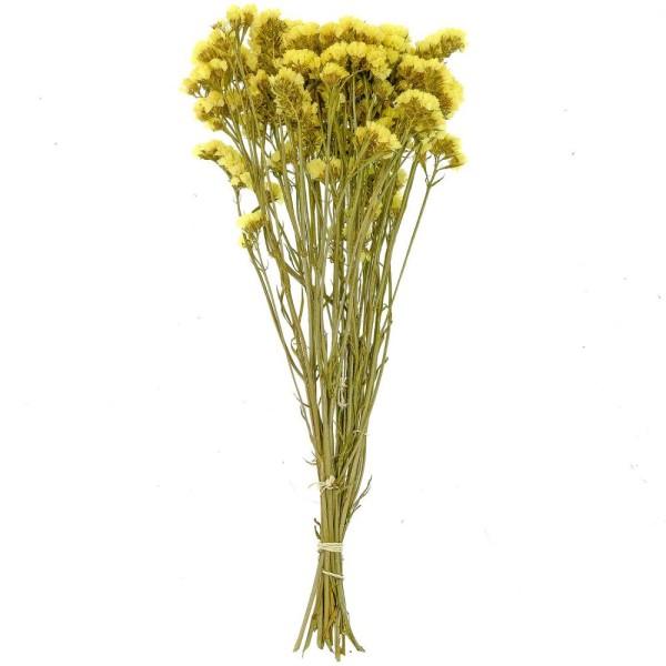 Bouquet de fleurs séchées statice sinuata jaune - 45 cm - Photo n°1