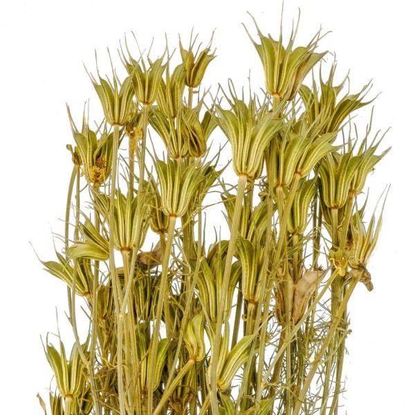 Bouquet fleurs séchées nigella orientalis - 55 cm - Photo n°3