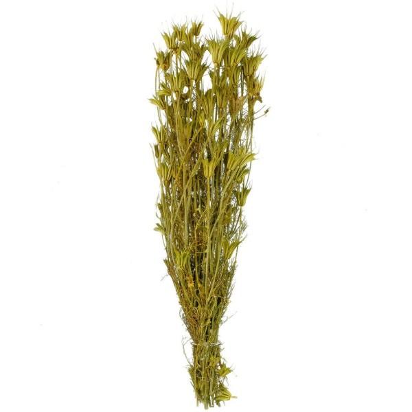 Bouquet fleurs séchées nigella orientalis - 55 cm - Photo n°1