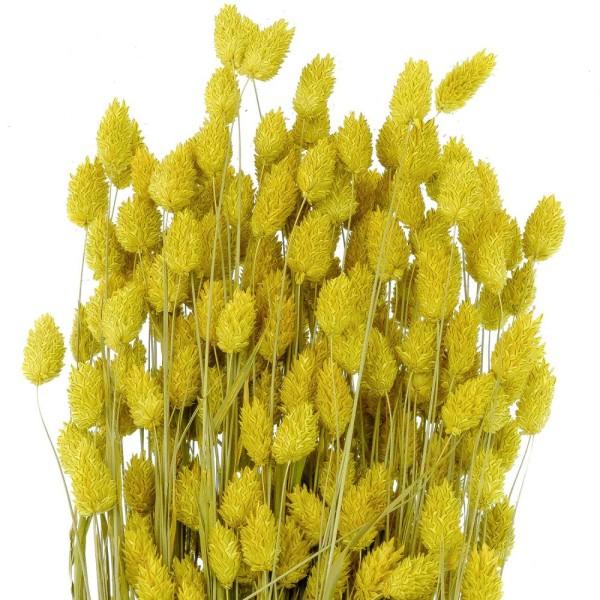Bouquet fleurs séchées phalaris jaune - 70 cm - Photo n°3