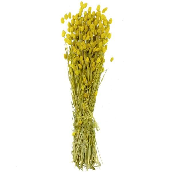 Bouquet fleurs séchées phalaris jaune - 70 cm - Photo n°1