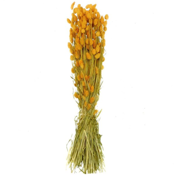 Bouquet fleurs séchées phalaris orange - 70 cm - Photo n°2