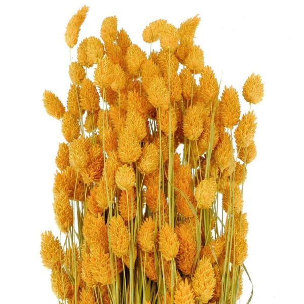 Bouquet fleurs séchées phalaris orange - 70 cm - Photo n°3