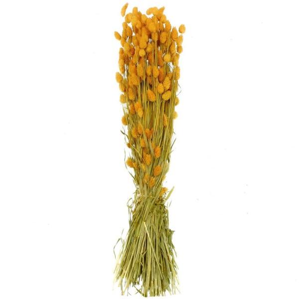 Bouquet fleurs séchées phalaris orange - 70 cm - Photo n°1