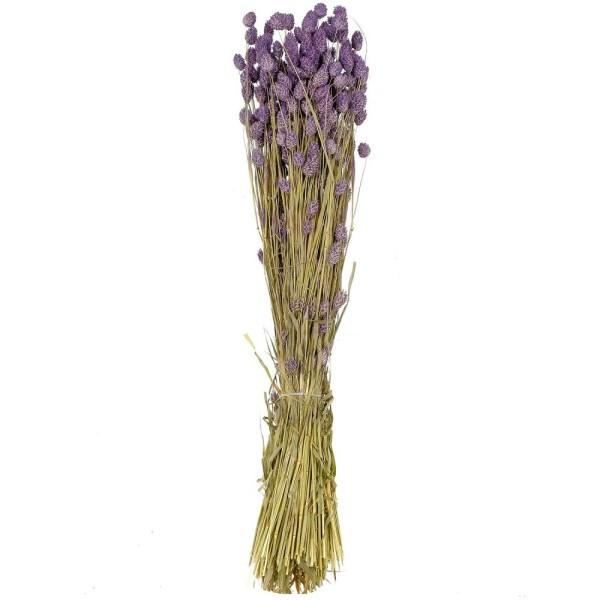 Bouquet fleurs séchées phalaris lavande - 70 cm - Photo n°1