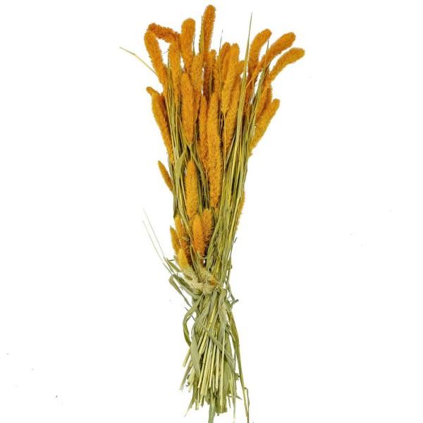 Bouquet fleurs séchées sétaria orange - 65 cm - Photo n°1