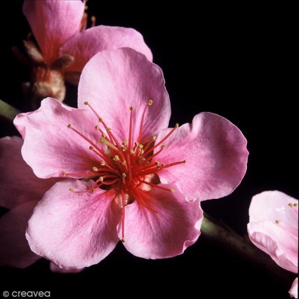 Image 3D Fleur - Fleur rose sur fond noir - 30 x 30 cm - Photo n°1