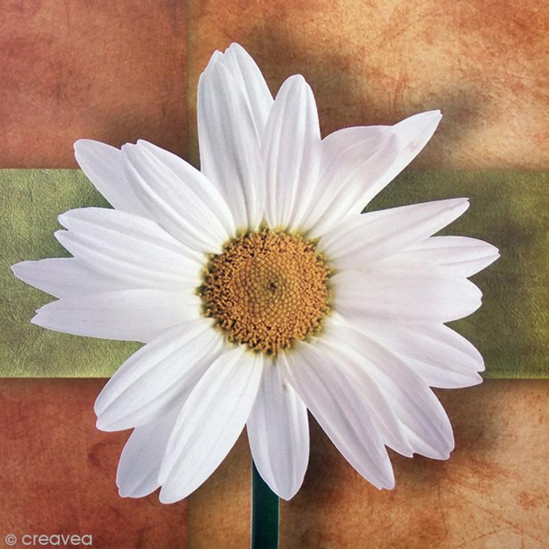 Image 3d fleur marguerite 30 x 30 cm images 3d 30x30 - Image fleur marguerite ...