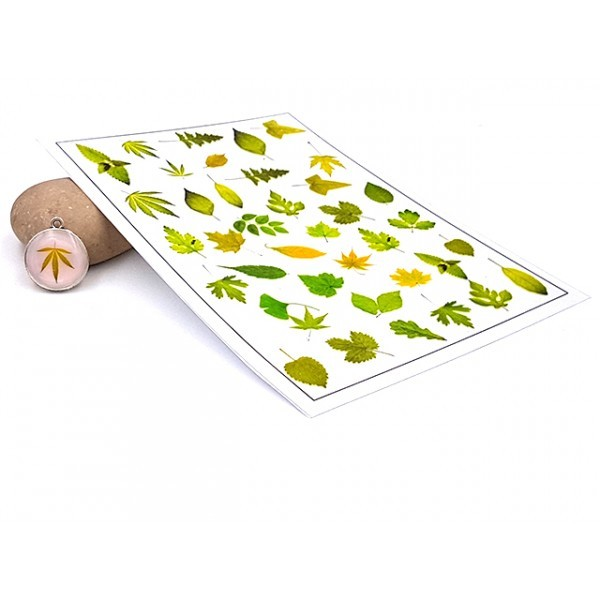 Feuille D'illustrations Feuilles D'arbres Vertes Pour Créations En Résine - Photo n°1