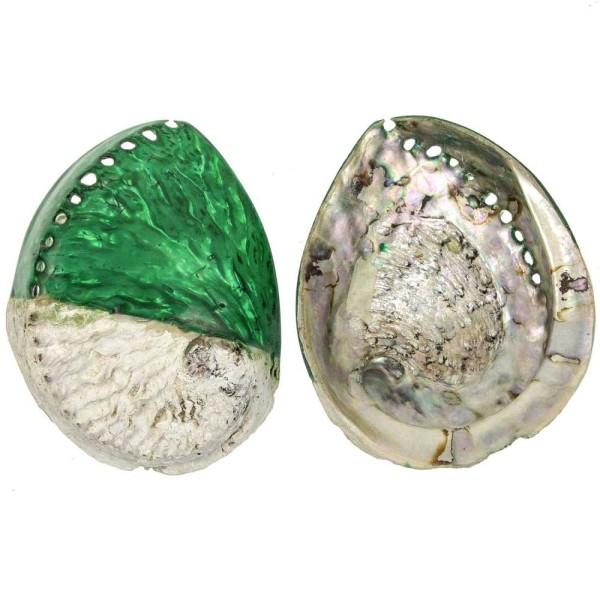 Coquillage haliotis mi-teinté vert - Taille 12 à 15 cm - Photo n°2