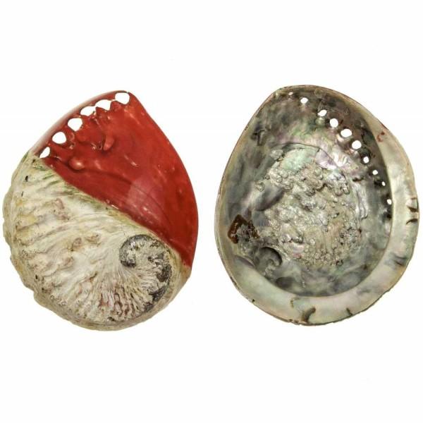 Coquillage haliotis mi-teinté rouge - Taille 12 à 15 cm - Photo n°1