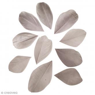 Plumes coupées - Gris clair - 2 g