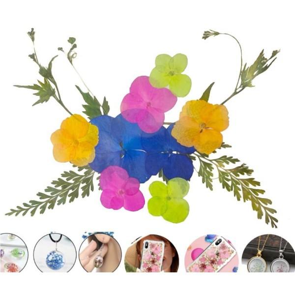 1 Jeu Orange Vert Rose Bleu Hortensia Mélange Naturel Pressé De Fleurs Séchées Feuilles Ammi Plantes - Photo n°1