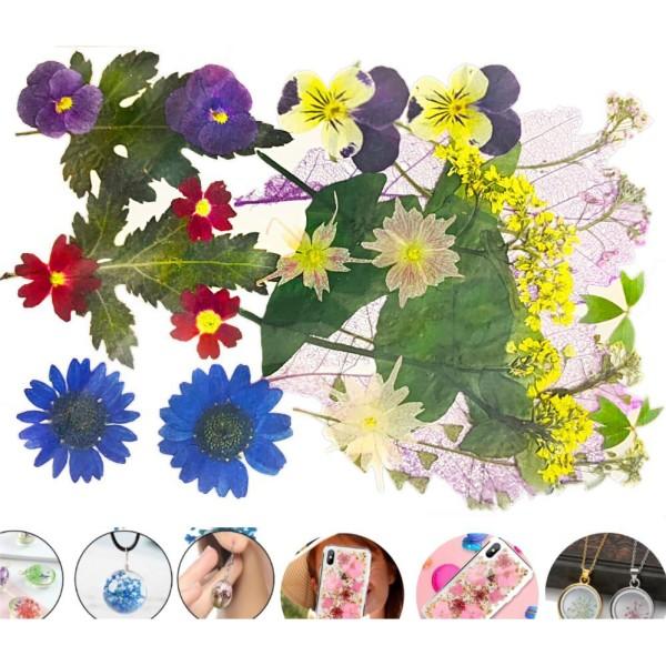 Mélange Bleu Violet Pansy Chrysanthème Naturel Pressé De Fleurs Séchées Feuilles Ammi Plantes Sèches - Photo n°1