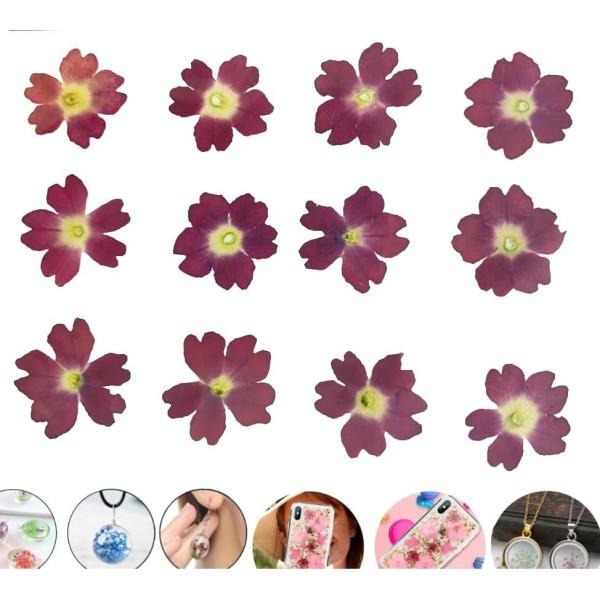12pcs Rouge Foncé Verveine Teint Pressé de Fleurs Séchées Plantes Sèches Époxy Résine Uv Pendentif N - Photo n°1