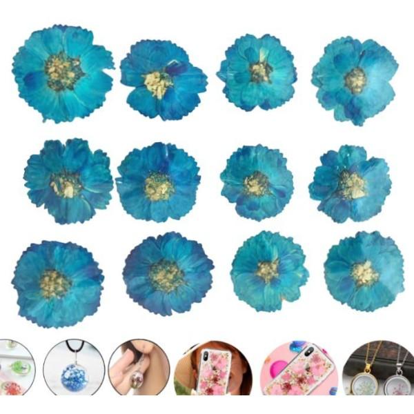 12pcs Turquoise Blue Daisy Teint Pressé de Fleurs Séchées Plantes Sèches Époxy Résine Uv Pendentif N - Photo n°1