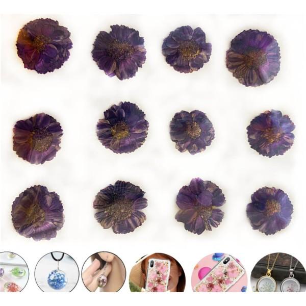 12pcs Violet Foncé Daisy Teint Pressé de Fleurs Séchées Plantes Sèches Époxy Résine Uv Pendentif Nai - Photo n°1