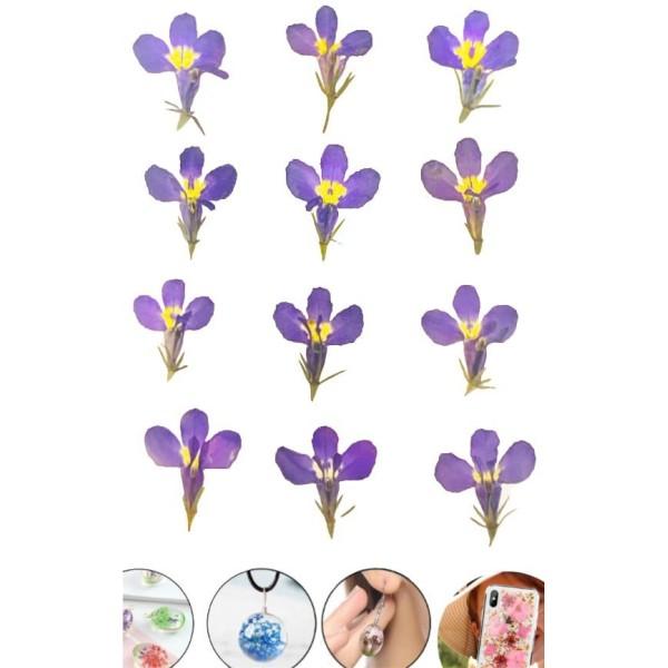 12pcs Bleu Jardin Lobelia Teint Pressé de Fleurs Séchées Plantes Sèches Époxy Résine Uv Pendentif Na - Photo n°1