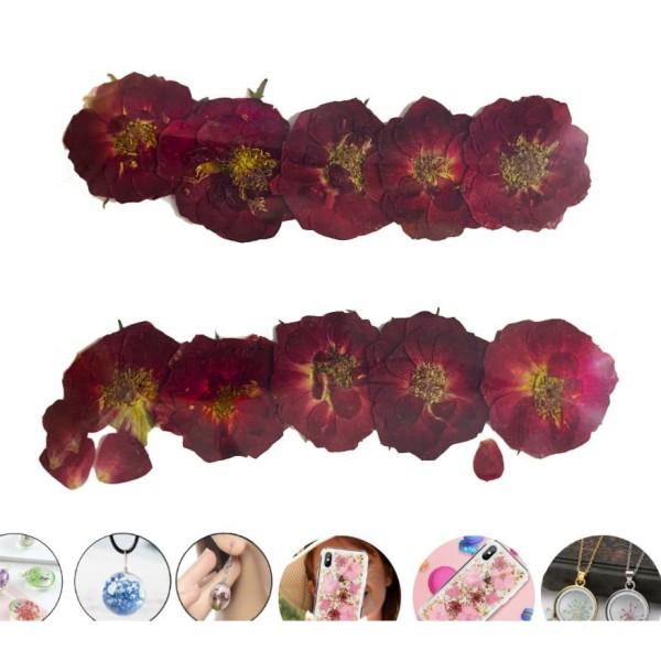10pcs Vin Rouge Petite Rose de Chine Teint Pressé de Fleurs Séchées Plantes Sèches Époxy Résine Uv P - Photo n°1