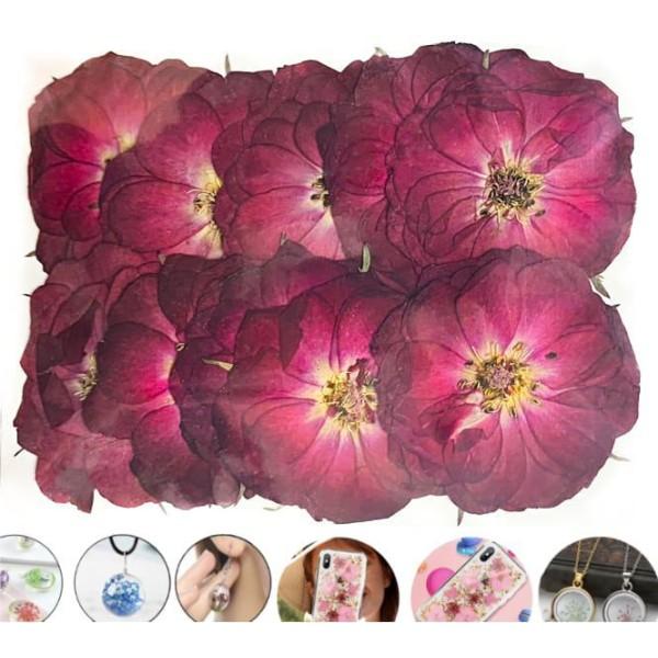 10pcs Vin Rouge de Grande Rose de Chine Teint Pressé de Fleurs Séchées Plantes Sèches Époxy Résine U - Photo n°1