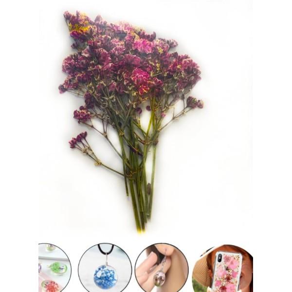 Violet Petit Souffle du Bébé Bush Teint Pressé de Fleurs Séchées Plantes Sèches Époxy Résine Uv Pend - Photo n°1