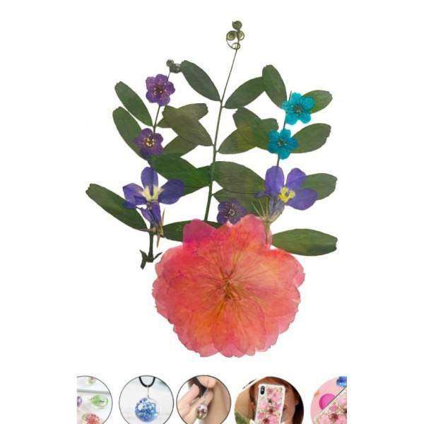 Mélange Rose Bleu Violet Rose Pansy Teint Pressé De Fleurs Séchées Plantes Sèches Époxy Résine Uv Pe - Photo n°1