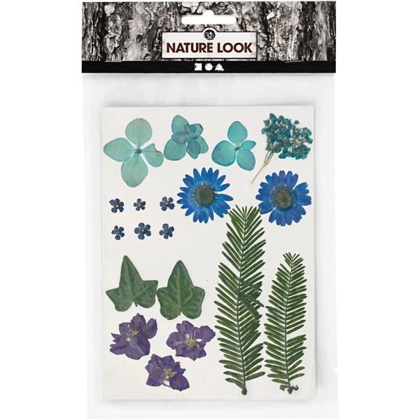 Assortiment de fleurs séchées et pressées - Bleu - 19 pcs environ - Photo n°2