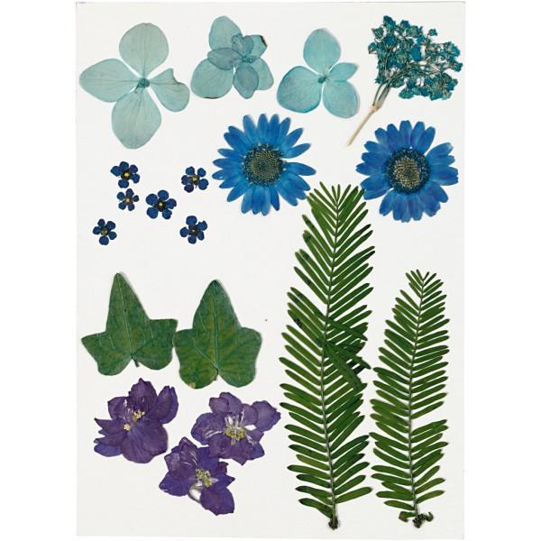 Assortiment de fleurs séchées et pressées - Bleu - 19 pcs environ - Photo n°1